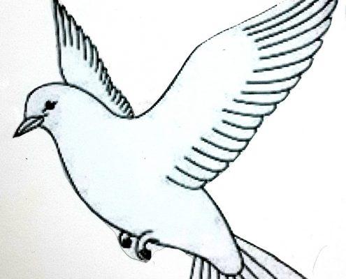 مدل سه بعدی کبوتر